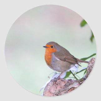 Robin Round Stickers