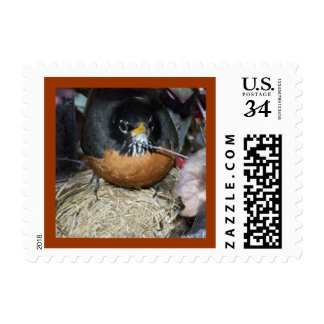 Robin We're Flying the Nest Moving Postage Postcar