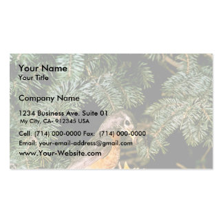Robin with Chicks Business Card