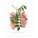 Robinia Postcards