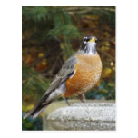 Robins Bath bird postcard