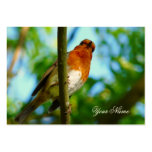 ROBINS BUSINESS CARD TEMPLATE