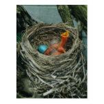 Robin's nest postcard