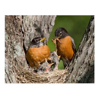 Robins V Postcard