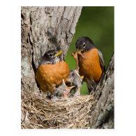 Robins VI Postcards