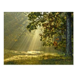 Roble con los rayos de sol de la mañana postal