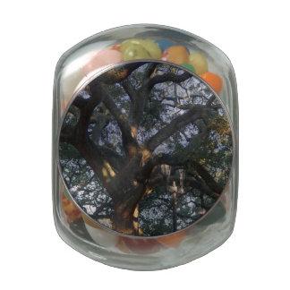 Roble de la sabana jarras de cristal jelly bely