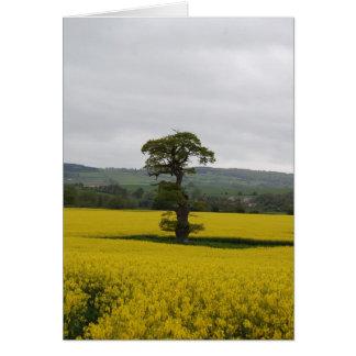 Roble del bosque tarjeta pequeña