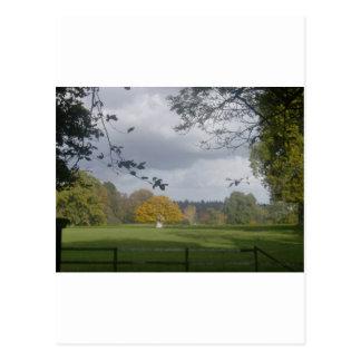 Roble en el nuevo bosque tarjetas postales