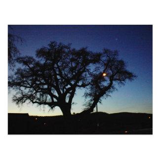 Roble en la oscuridad en la postal de Paso Robles