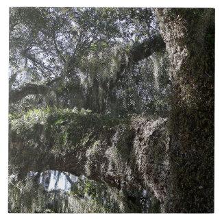 Roble meridional azulejo cuadrado grande