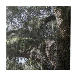 Roble meridional azulejo cuadrado pequeño