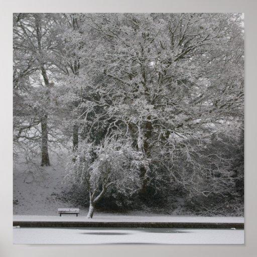 Roble Nevado Impresiones