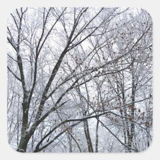 Roble nevado pegatina cuadrada