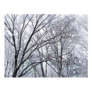 Roble nevado postal