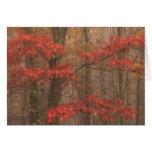 Roble rojo en niebla tarjeta de felicitación