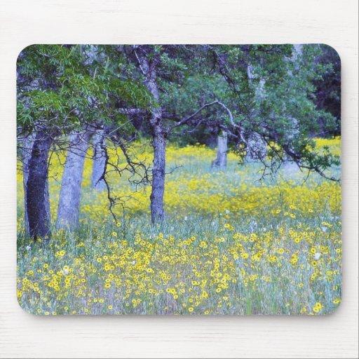 Robles de los bosques de los campos de flores tapetes de ratones