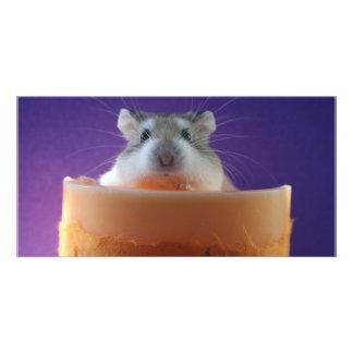 Roborovksi Hamster Photo Card