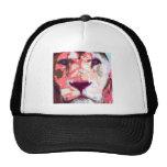 Robs cat hat