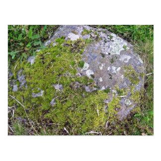 Roca cubierta de musgo verde postal