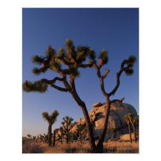 Roca del cactus y del casquillo de Cholla, yuca Impresiones