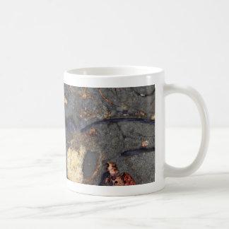Roca del carbonato con los fósiles taza de café