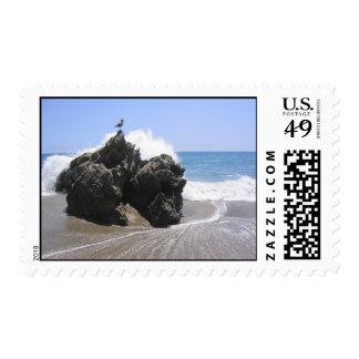 roca del océano con el pájaro sello