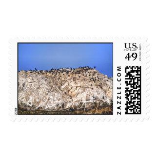Roca del pájaro sello