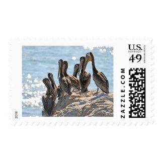 Roca del pelícano sellos