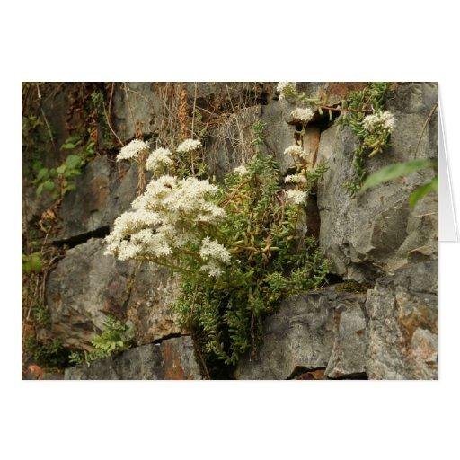 Roca floreciente tarjeta de felicitación