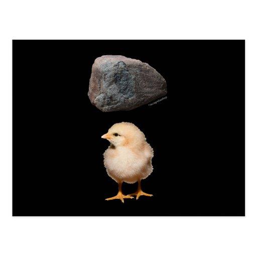 Roca + Polluelo Postales