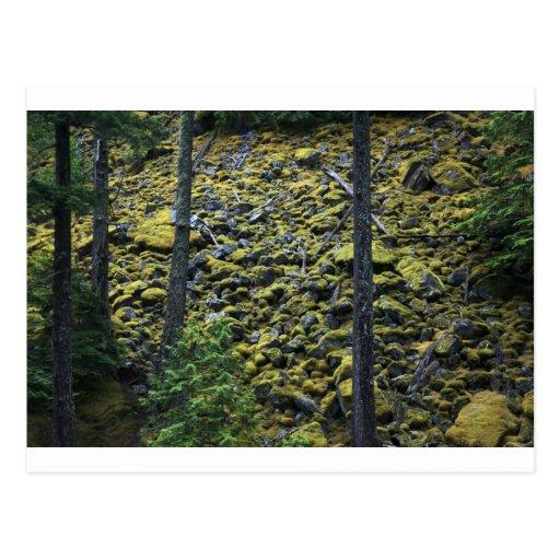 Rocas cubiertas de musgo tarjetas postales