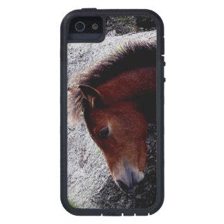 Rocas de la colina del hueso del potro del potro d iPhone 5 Case-Mate cárcasas