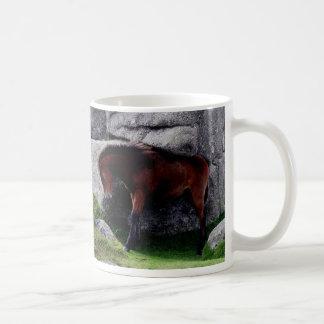 Rocas de la colina del hueso del potro del potro d tazas de café