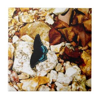 Rocas, hojas y mariposa azulejo cuadrado pequeño