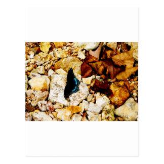 Rocas, hojas y mariposa tarjeta postal