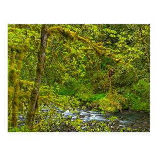 Rocas y línea de árboles cubiertas de musgo Eagle Postales