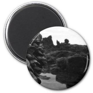 Rocas y músculos de BW de la playa de Newport Imán Redondo 5 Cm