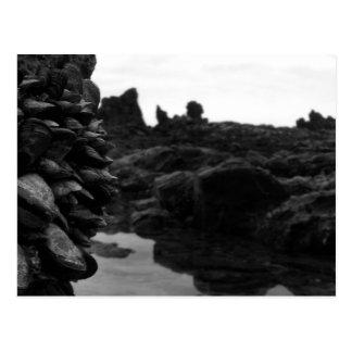 Rocas y músculos de BW de la playa de Newport Postal