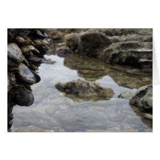 Rocas y músculos de la playa de Newport Felicitacion