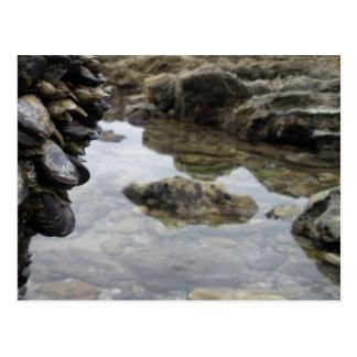 Rocas y músculos de la playa de Newport Tarjetas Postales