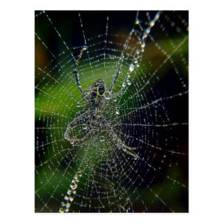 Rocío de la madrugada de la araña