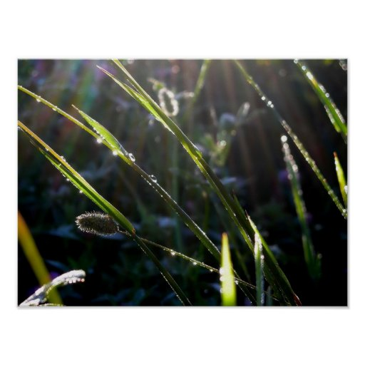 Rocío en hierba posters