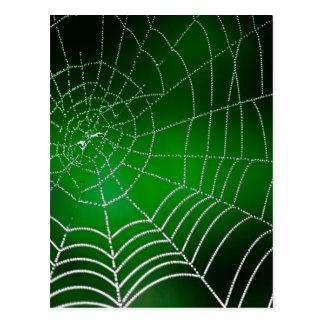 Rocío en spiderweb tarjeta postal