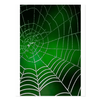 Rocío en spiderweb postal