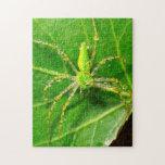 Rocío en una araña verde del lince puzzles