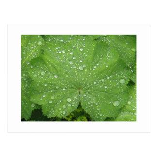 Rocío en una postal verde de la hoja
