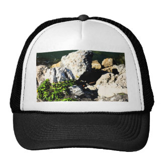Rock abstract with green plant painterly trucker hat