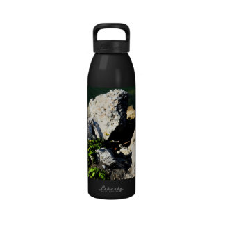 Rock abstract with green plant painterly reusable water bottle