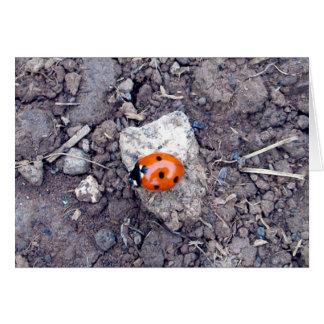 Rock Climber Ladybug Greeting Card